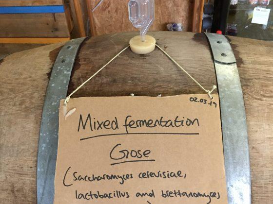 Mixed Fermentation Gose